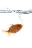 Animais de estimação na água foto de stock