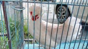 Animais de estimação & pássaros Fotos de Stock