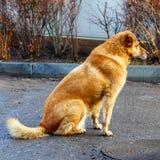 Animais de estimação que guardam a casa e o agregado familiar fotografia de stock