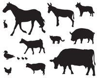 Animais de exploração agrícola Fotografia de Stock