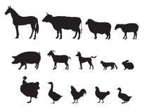 Animais de exploração agrícola ajustados. Rebanhos animais. Imagem de Stock Royalty Free