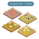 Animais de exploração agrícola isométricos ajustados Foto de Stock Royalty Free