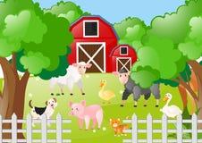Animais de exploração agrícola que vivem o pátio Fotos de Stock Royalty Free