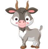 Animais de exploração agrícola Cabra Fotografia de Stock