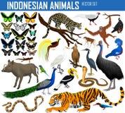 Animais de Indonésia e de Indochina - grupo do vetor ilustração stock