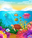 Animais de mar que nadam sob o oceano Fotos de Stock Royalty Free
