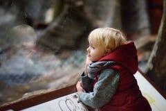 Animais de observação do menino da criança através do vidro no jardim zoológico imagem de stock