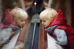 Animais de observação do menino da criança através do vidro no jardim zoológico imagens de stock