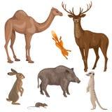 Animais de zonas da floresta, do deserto e do estepe Foto de Stock Royalty Free
