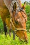 Animais do companheiro - cavalos fotografia de stock