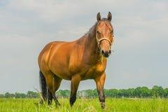 Animais do companheiro - cavalos foto de stock