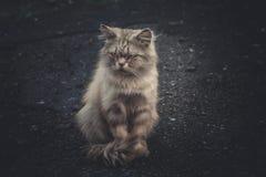 Animais do gatinho da vaquinha dos gatos do gato fotografia de stock