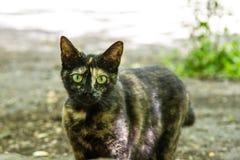 Animais do gatinho da vaquinha dos gatos do gato imagem de stock