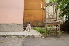 Animais do gatinho dos gatos do gato fotos de stock
