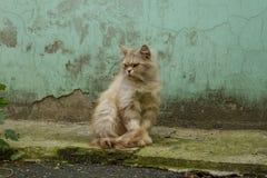 Animais do gatinho dos gatos do gato foto de stock royalty free