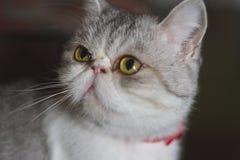 Animais do gatinho dos gatos do gato foto de stock