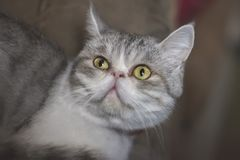 Animais do gatinho dos gatos do gato fotos de stock royalty free