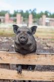 Animais do país crescidos em circunstâncias a favor do meio ambiente com cuidado e em amor Imagem de Stock
