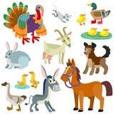 Animais domésticos Fotos de Stock Royalty Free