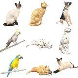 Animais domésticos (com trajetos de grampeamento) Imagens de Stock