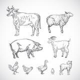 Animais domésticos tirados mão ajustados Uma coleção de silhuetas do porco, da vaca, da cabra, do cordeiro e dos pássaros Desenho ilustração do vetor