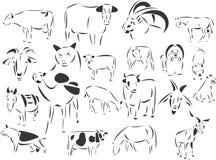 Animais domésticos Fotografia de Stock