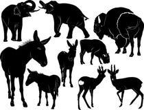 Animais dos mamíferos ilustração stock