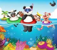 Animais e oceano Imagens de Stock