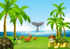 Animais e oceano Fotografia de Stock Royalty Free