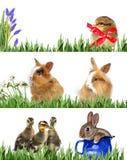 Animais e ovos da páscoa da mola Fotos de Stock