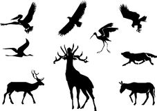 Animais e pássaros Foto de Stock Royalty Free