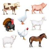 Animais e pássaros Fotografia de Stock