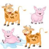Animais engraçados Fotografia de Stock Royalty Free