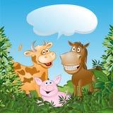Animais engraçados Fotografia de Stock