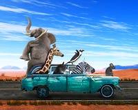 Animais engraçados, viagem por estrada, curso, férias ilustração stock