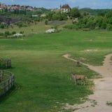 Animais Hoofed no campo Animais africanos no território foto de stock