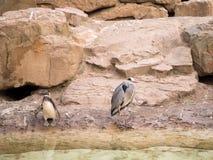 Animais no jardim zoológico fotos de stock