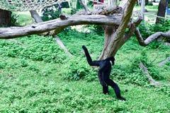 Animais no jardim zoológico foto de stock