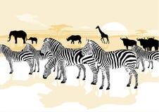 Animais no savana Imagens de Stock