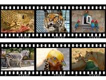 Animais nos frames da película Fotos de Stock Royalty Free