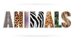 Animais - palavra Fotografia de Stock