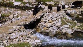 Animais que andam em uma ponte de pedra vídeos de arquivo