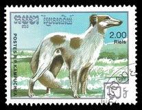 Animais, raças do cão, Borsoi Fotografia de Stock Royalty Free