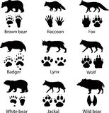 Animais selvagens Foto de Stock