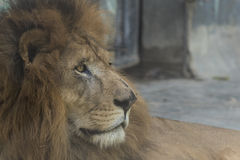 Animais selvagens fotos de stock royalty free