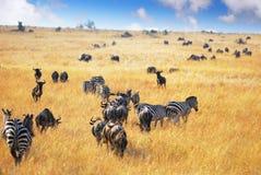 Animais selvagens africanos Fotografia de Stock Royalty Free