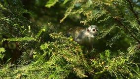 Animais selvagens das Amazonas vídeos de arquivo