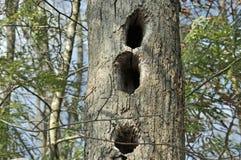 Animais selvagens Den Tree Fotos de Stock Royalty Free