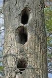 Animais selvagens Den Tree Foto de Stock Royalty Free