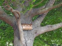 Animais selvagens do ninho da caixa de pássaro da casa na árvore Fotos de Stock Royalty Free